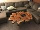 Журнальный стол из слэба Тира 4 (Тополь)