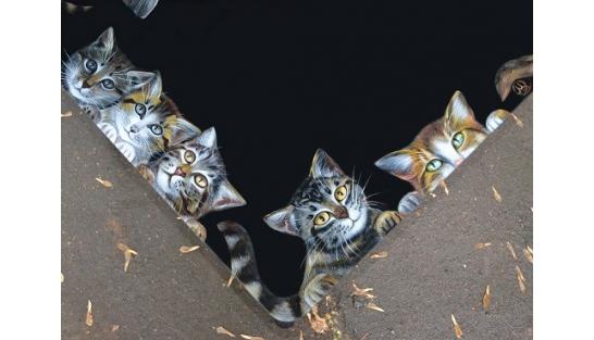 Котики 65*65
