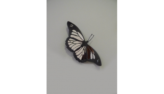 Бабочка (с зеркалом)