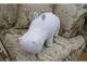 Мини-Бегемот (Белый)